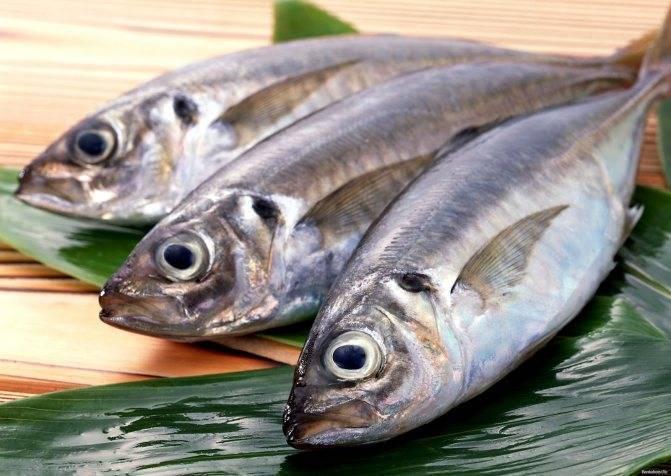 Палтус: польза и вред, калорийность рыбы на 100 грамм