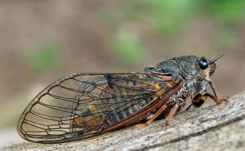 Виды жуков с фото и названиями
