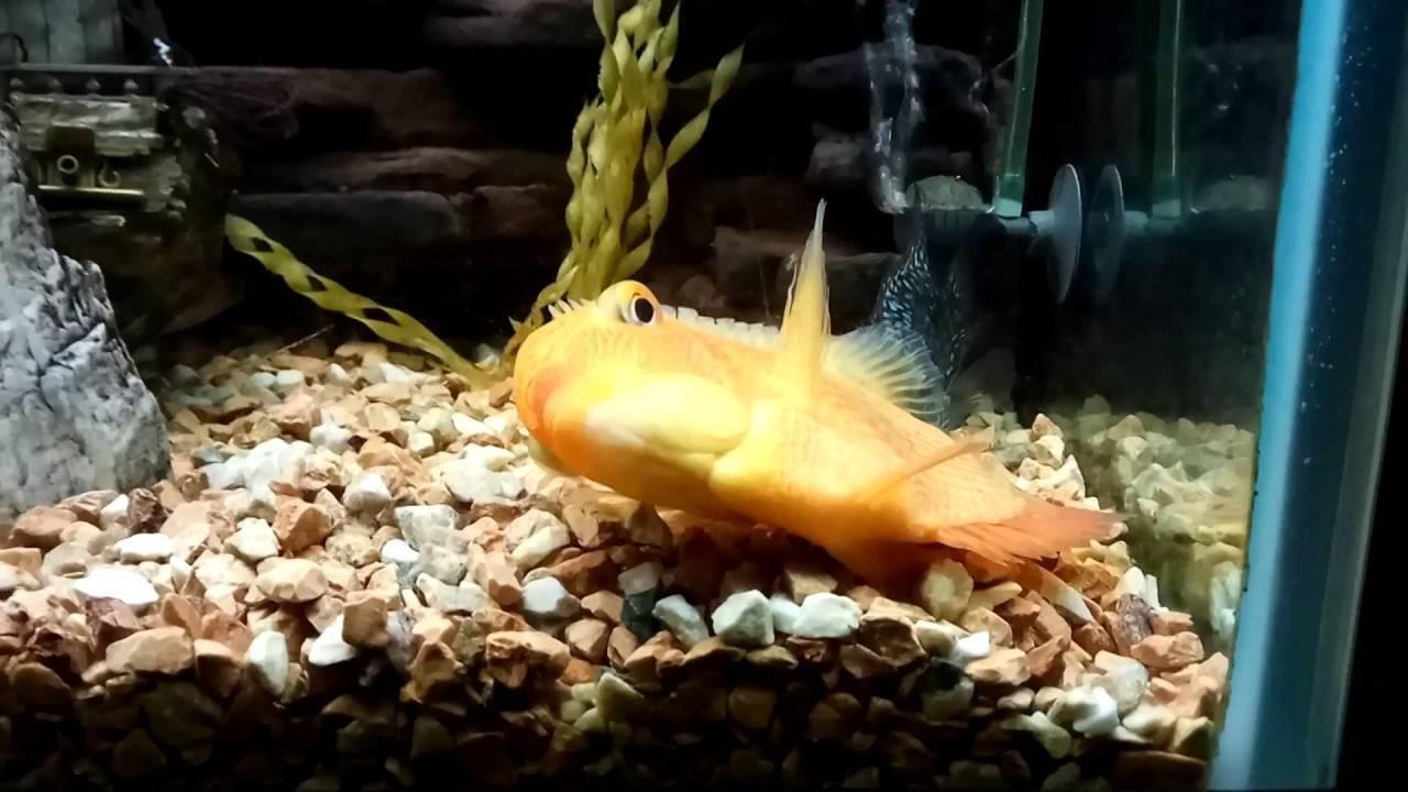 Как спят рыбы и спят ли они вообще?