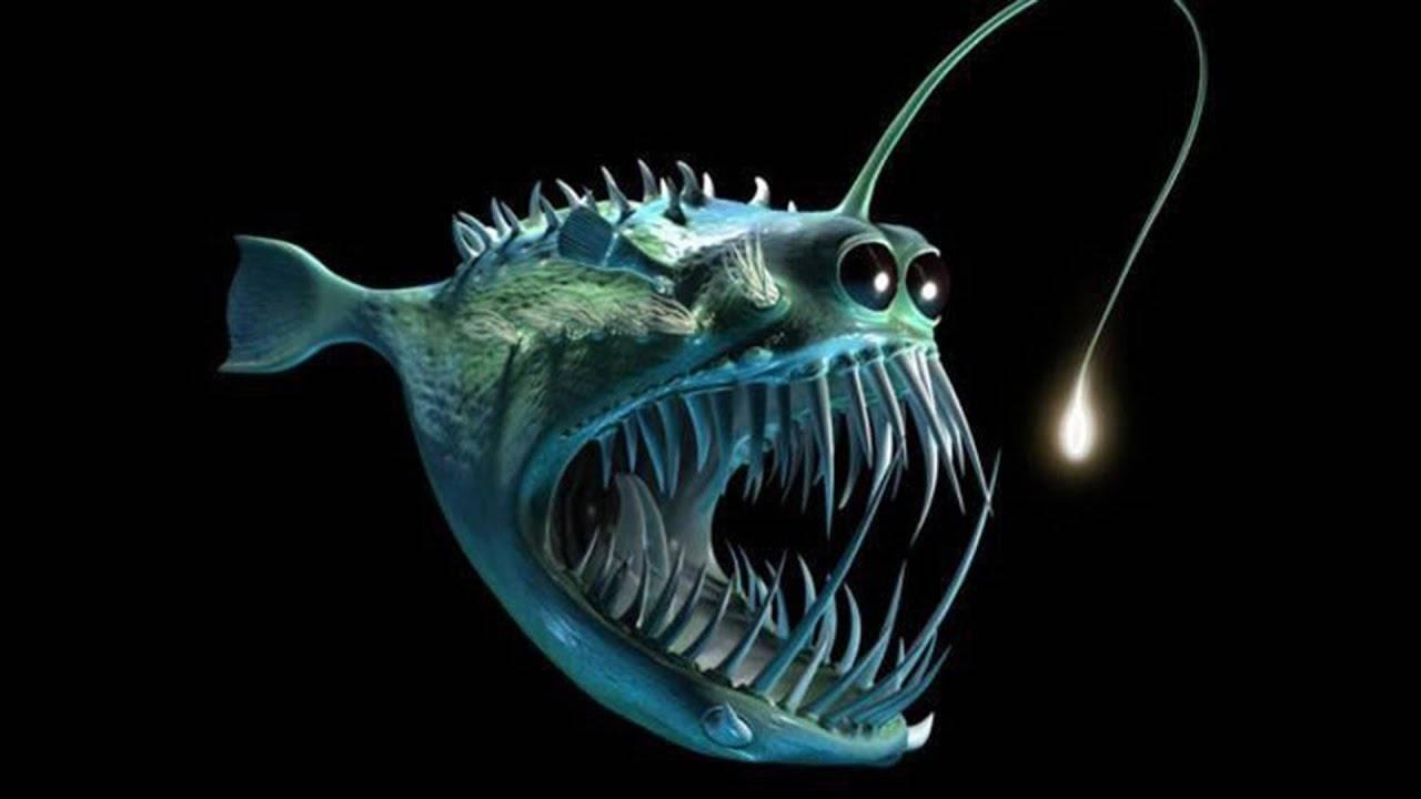 Рыба удильщик: среда обитания, питание и размножение, половые различия глубоководного морского черта