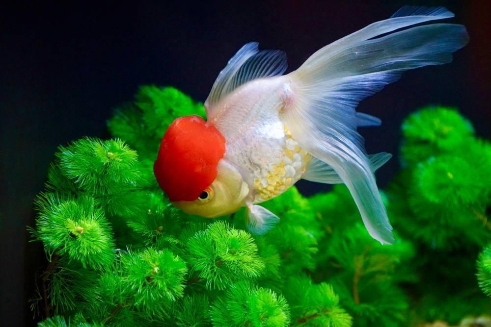 Рыба попугай: фото, содержание и уход, а также совместимость с другими обитателями аквариума