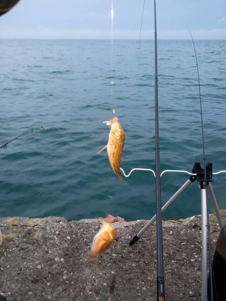 Рыба сибас: описание, места обитания и применение в кулинарии