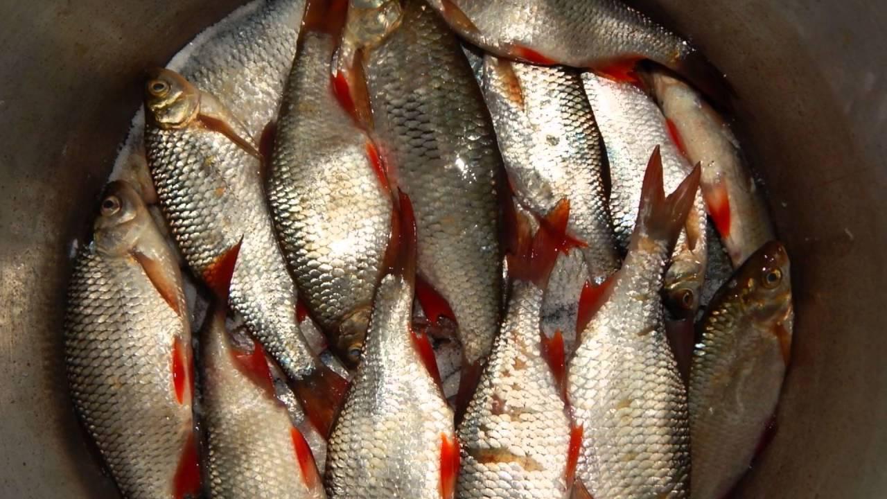 Вяленая рыба по простому пошаговому рецепту с фото