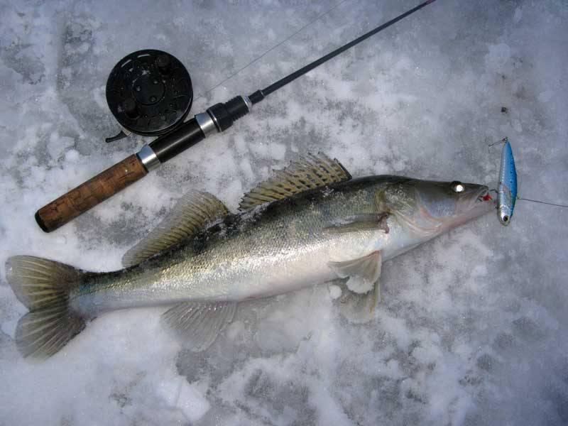 Ратлины на судака: выбор лучших моделей и техника ловли зимой