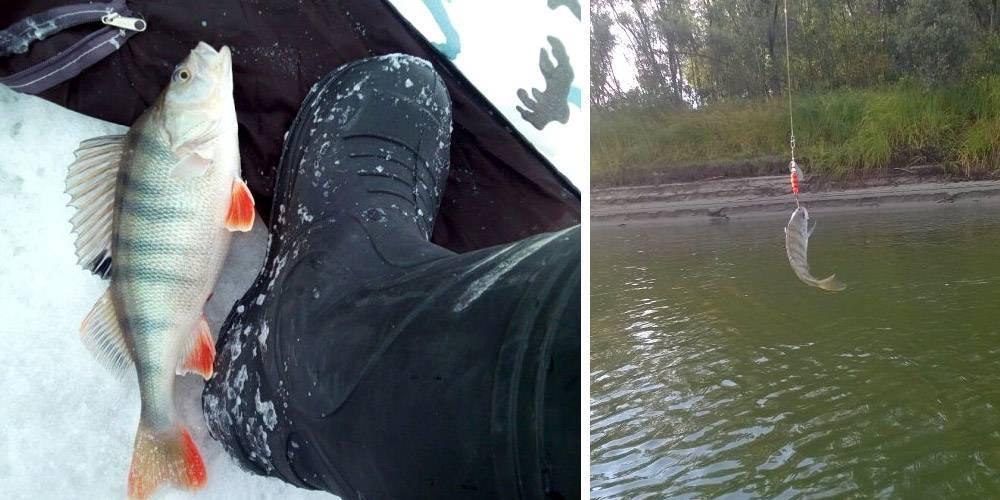 При каком давлении лучше рыбалка зимой