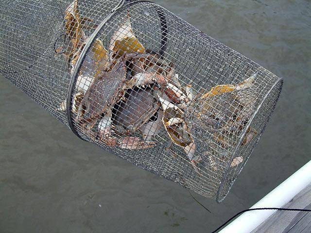 Как сделать ловушку для рыбы своими руками?