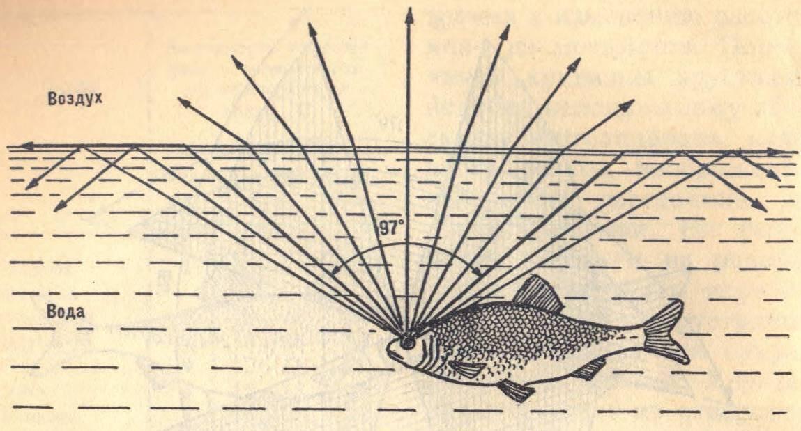 Шесть вариантов подбора блесен - zaulov.by - ну, за рыбалку!