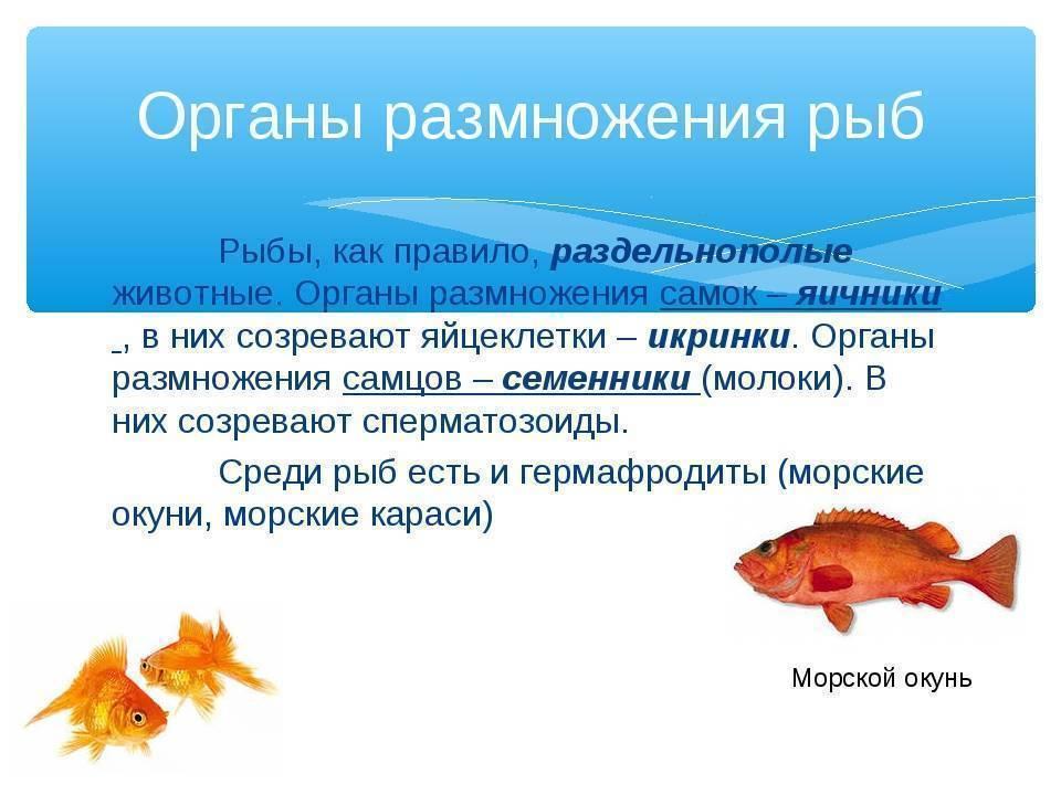 Биология. § 33. особенности размножения рыб