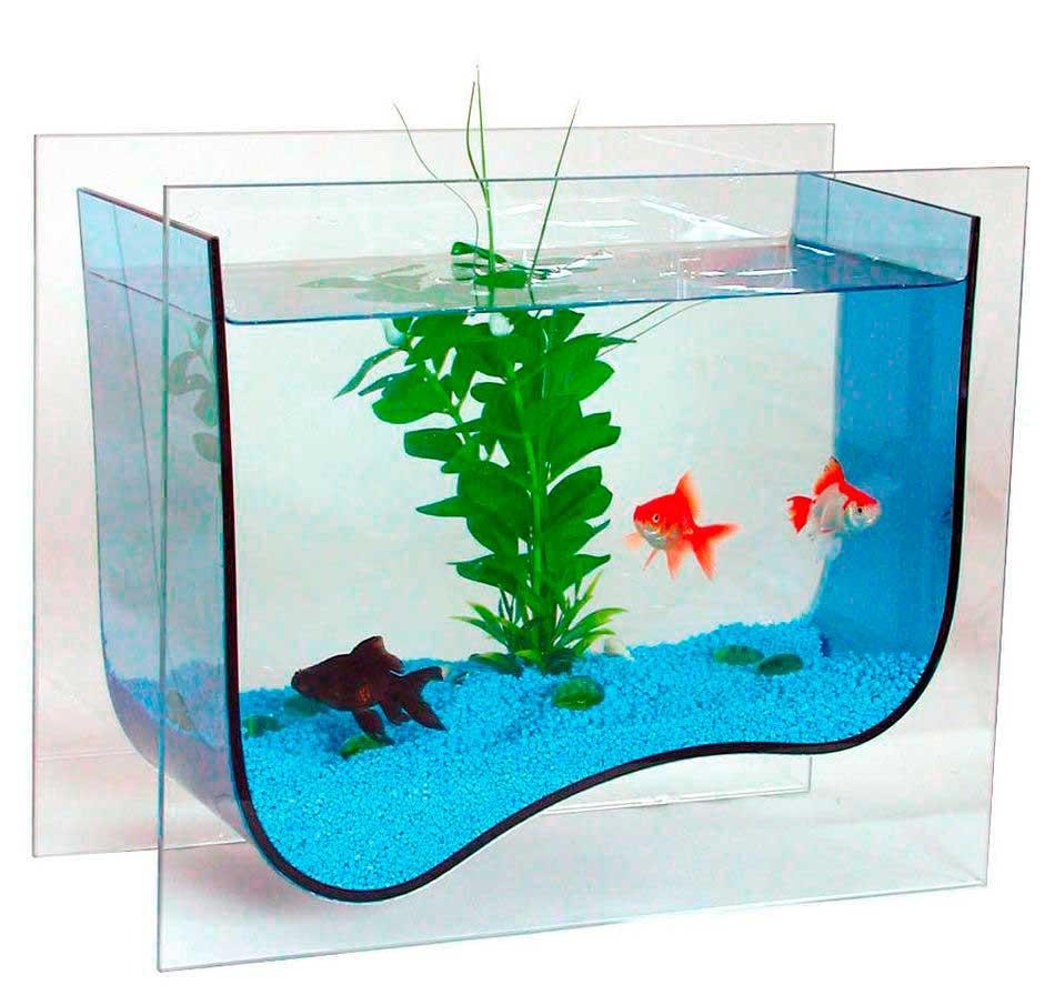 Выбираем аквариум для дома, полезные советы