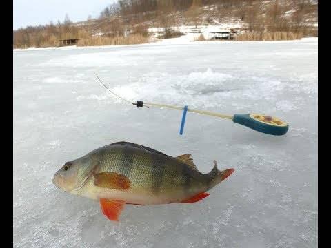 Что нужно знать о зимней рыбалке на карпа