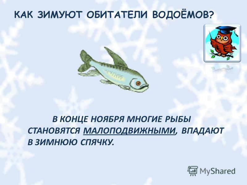 Класс хрящевые рыбы. строение, размножение, разнообразие и значение хрящевых рыб. надотряды: акулы, скаты и химеры   биология
