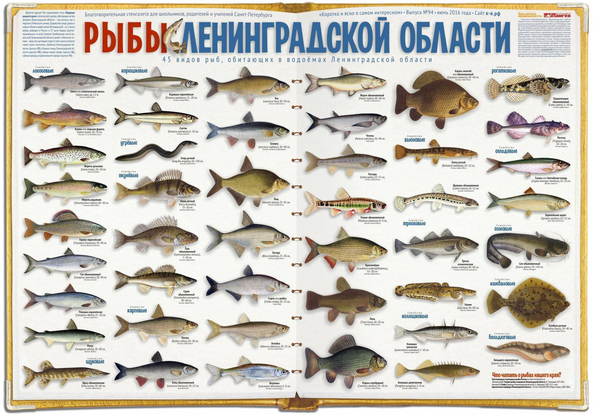 Виды морских рыб иособенности ихобитания