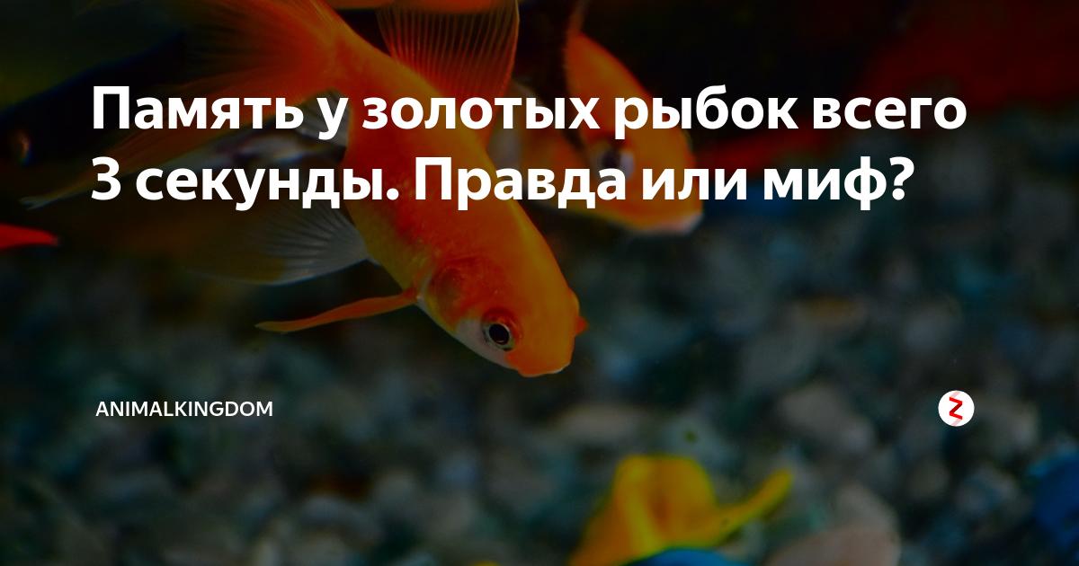 Какая память у рыб? эксперементы и различия в видах