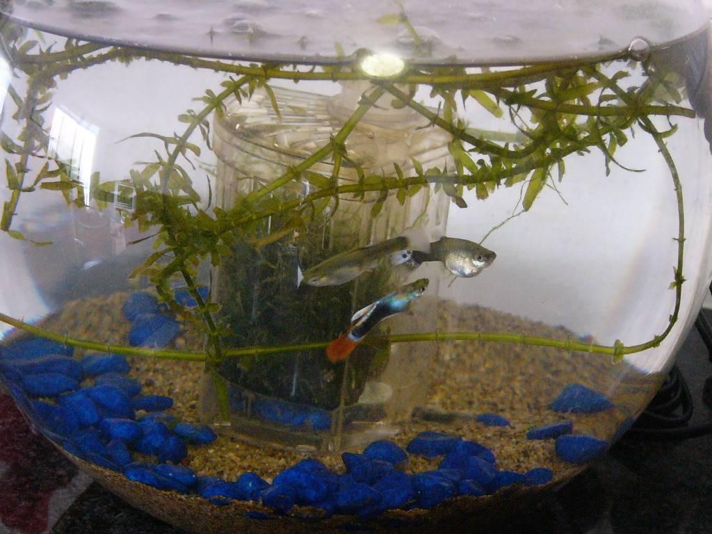 Разведение аквариумных рыб: подготовка, создание условий, уход за молодью