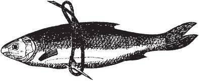 Ловля налима - календарь клева, выбор приманок и снастей