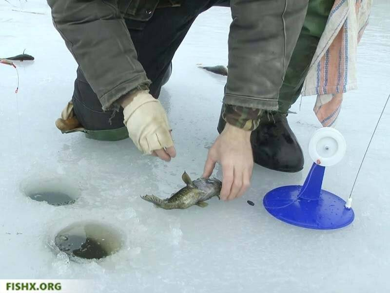 Рыбалка на жерлицы зимой: видео, техника и тактики зимней ловли, как насадить живца