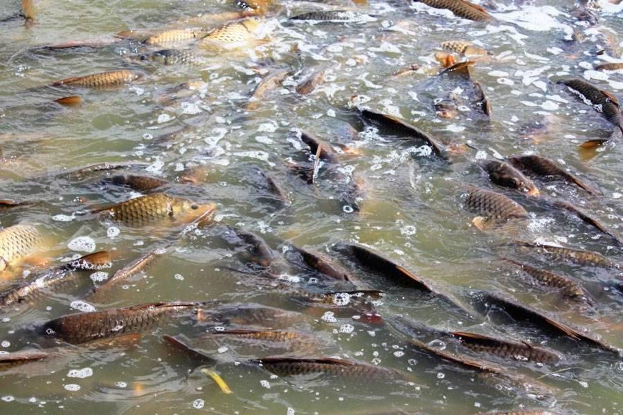 Рыбы – знак зодиака. характер, психология | гороскопы 365
