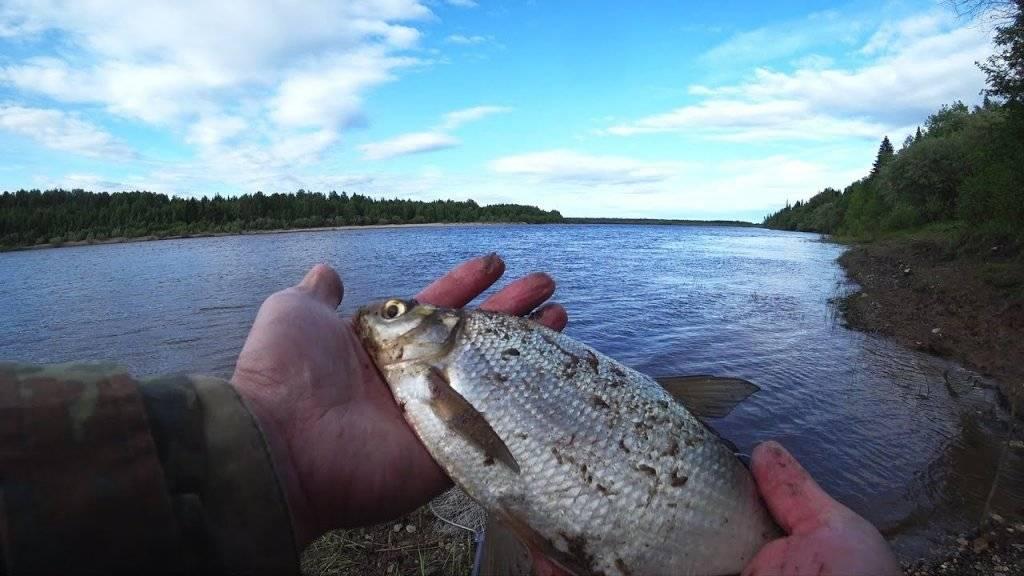 Внимание рыбаков: с 1 октября вступает в силу запрет на ловлю рыбы ::  новости
