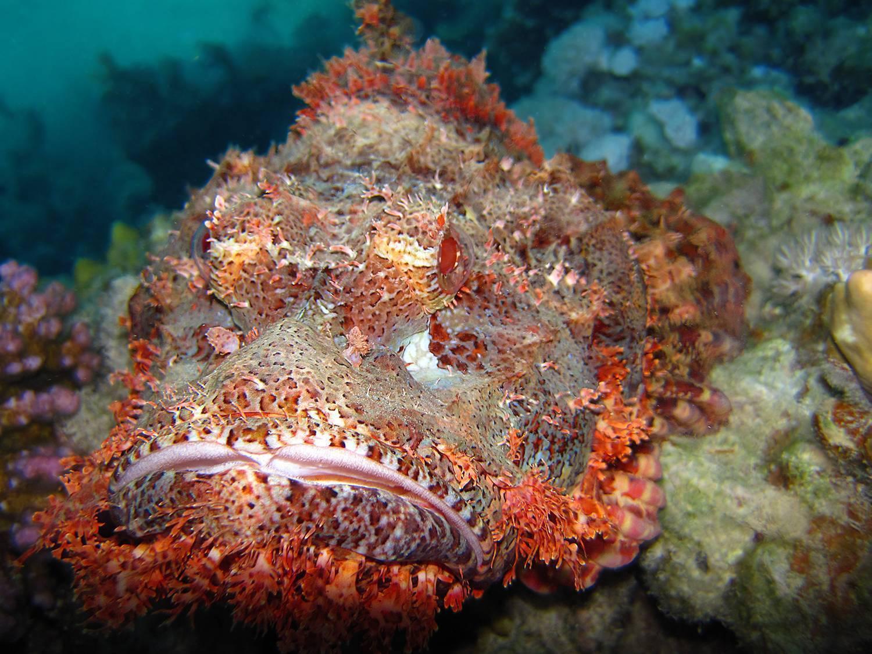 Красное море. рыбы красного моря: описание с фото :: syl.ru