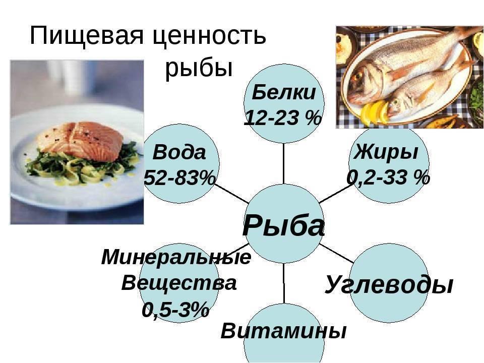 Кета что за рыба, полезные свойства, польза и вред для здоровья