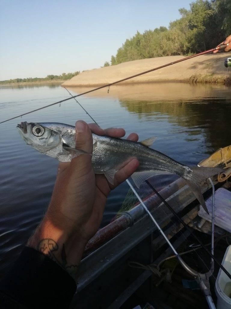Рыбалка на озере маныч-гудило: список рыболовных туров