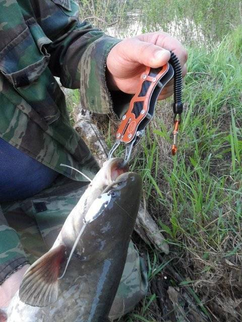 Рыбалка на красивой мече - лучшие места на реке платные и бесплатные, отзывы и видео