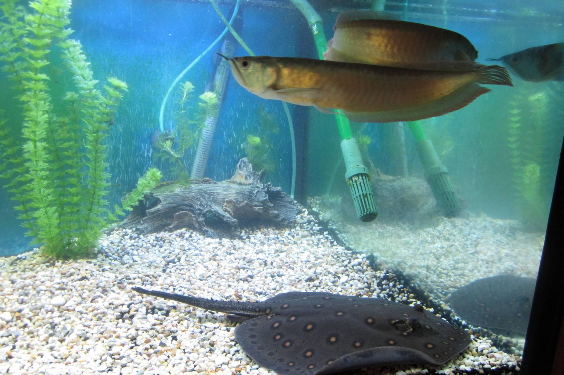 Морская лисица: не зверь, а рыба. обыкновенная морская лисица лисья акула описание