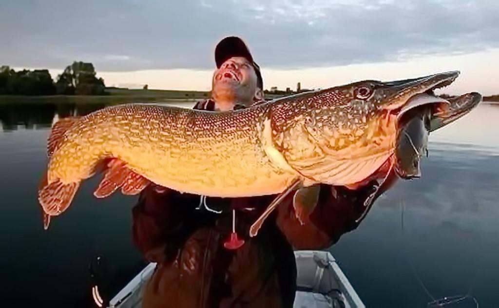 Самая большая щука в мире: мифы и факты об огромных рыбинах