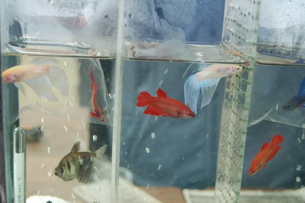 Разведение аквариумных рыбок для продажи: отличная идея домашнего бизнеса!