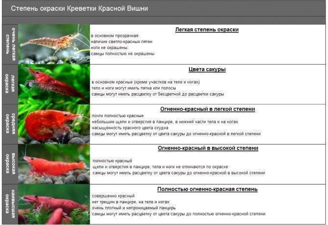 Красный паку: содержание,размножение,совместимость,описание,фото.