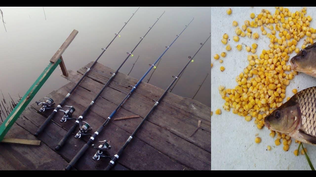 Как ловить карпа летом, советы и рекомендации рыбакам