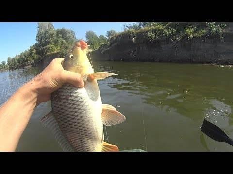 Рыбалка на ахтубе в сентябре: видео, где лучше ловить дикарем, какая рыба водится