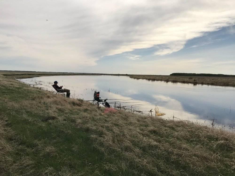 Нерестовый запрет на рыбалку в нсо 2020. полный список ограничений - статьи о рыбалке