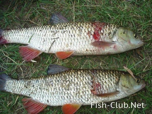 Рыбалка в брянской области и в брянске - fishingwiki