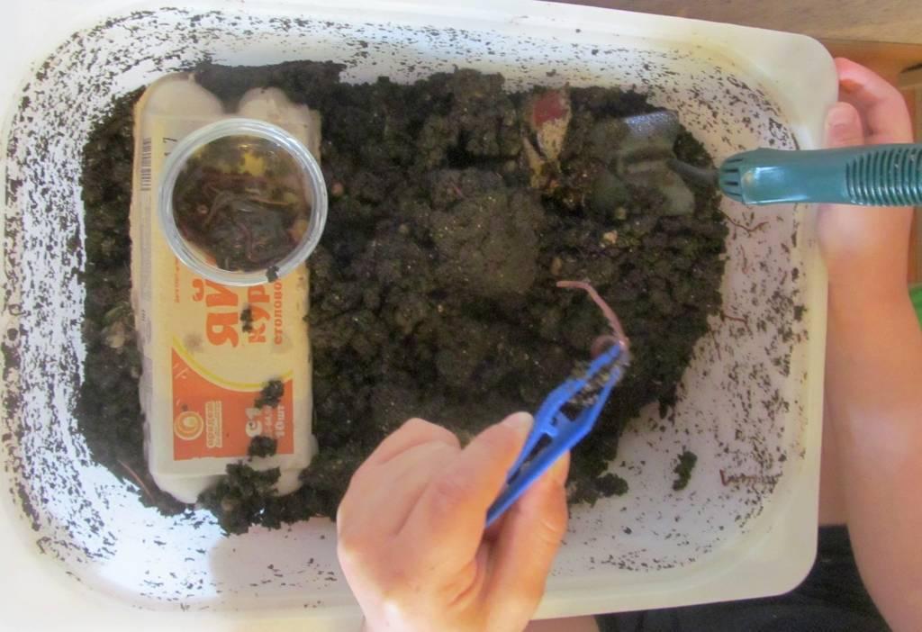 Где накопать червей для рыбалки: подготовка инструментов, выбор места