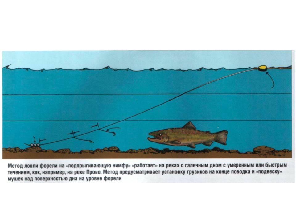 Особенности ловли форели на спиннинг