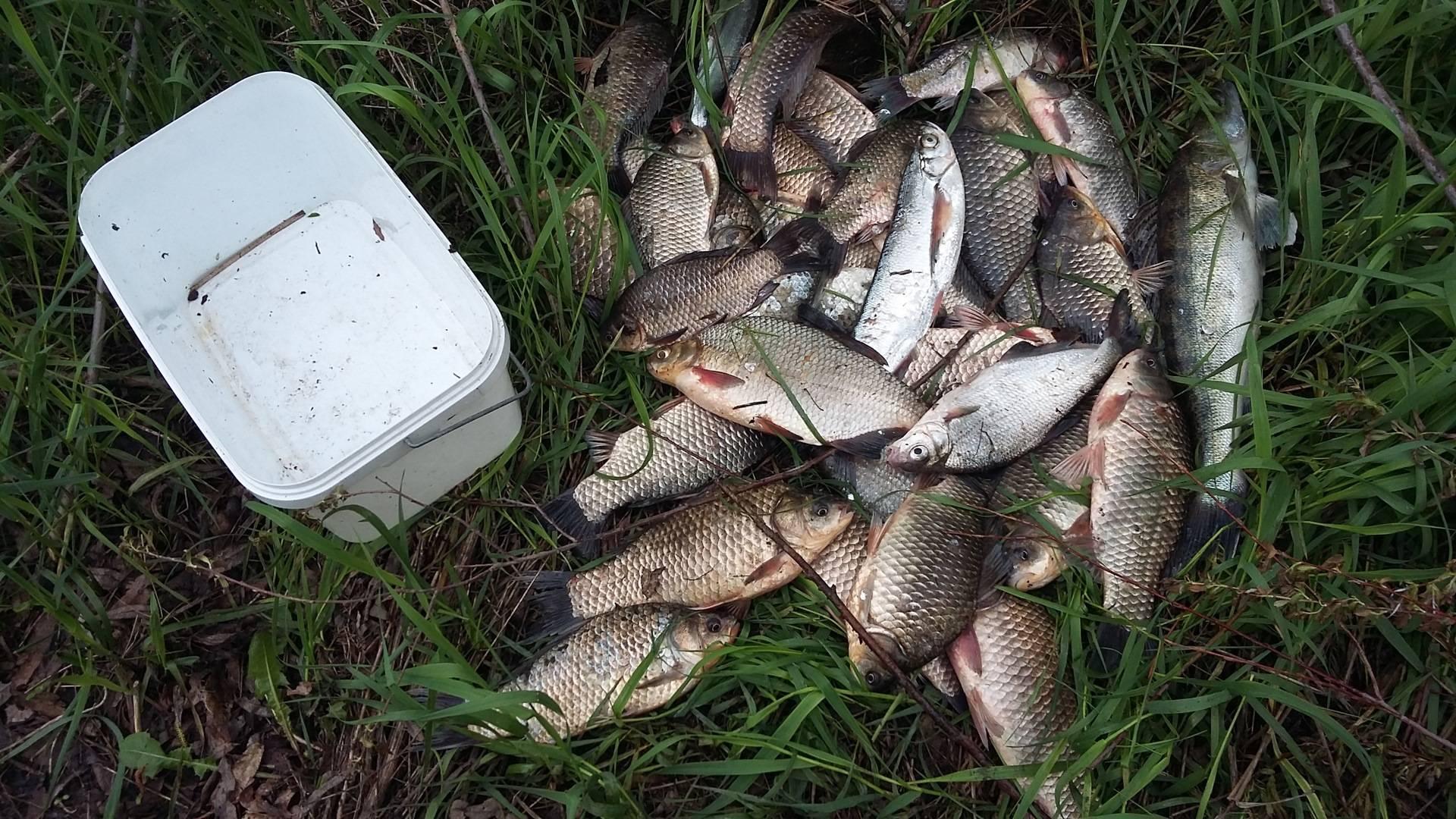 Лучшие места и особенности рыбалки в белгородской области
