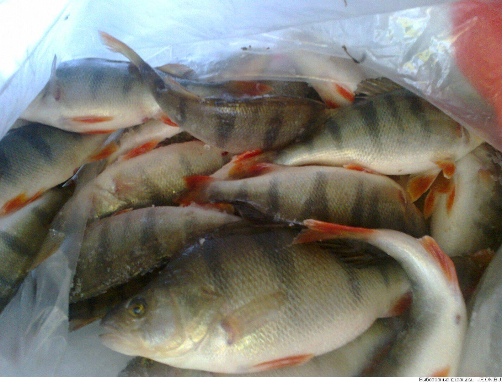 Рыбалка в омской области — обзор водоемов | lovitut.ru (рыбалка и бильярд) | яндекс дзен
