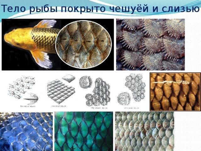Болезни рыб (речных и пресноводных): фото с описанием, классификация, симптомы