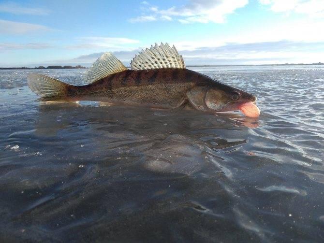 Места для рыбалки в ханты-мансийском автономном округе – платная и бесплатная рыбалка!
