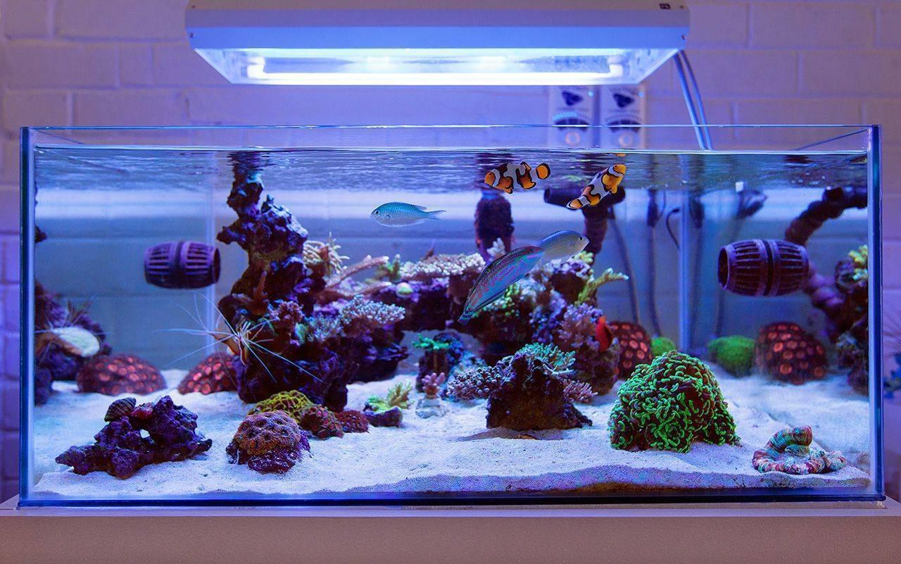 Осмос для аквариума: что это, как установить и как использовать?