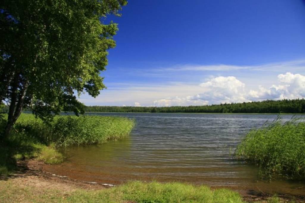 Липовское озеро в ленинградской области — на карте, как добраться, отзывы, база отдыха, рыбалка, фото
