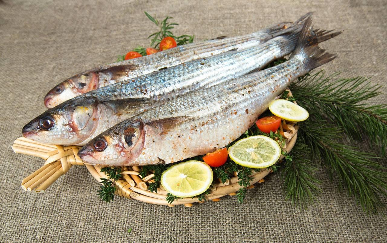 Лобань – рыба для здорового питания