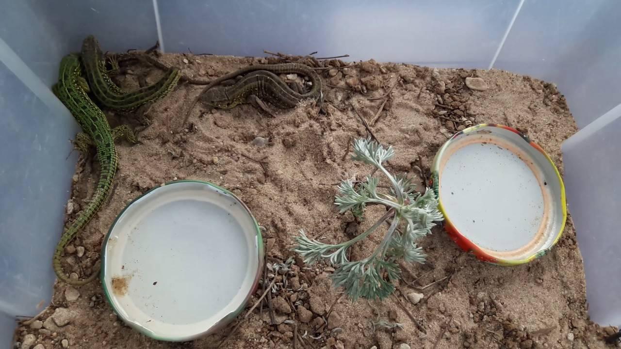 Каких змей можно держать дома: особенности поведения, уход и кормление, меры предосторожности