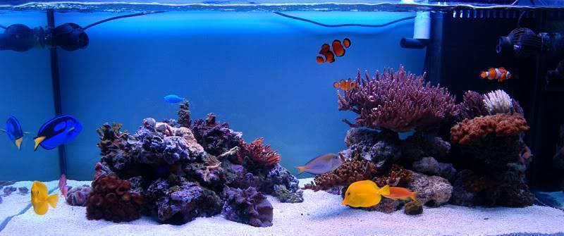 Запуск аквариума (42 фото): пошаговая инструкция запуска с нуля аквариума на 100 и 200 литров? как запускать в первый раз аквариумы на 30 и 20 литров?
