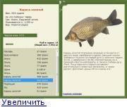 Что за рыба сазан и основные способы ловли сазана