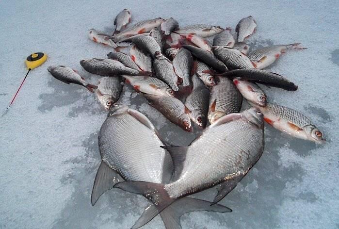 Ловля разных видов рыб по последнему льду
