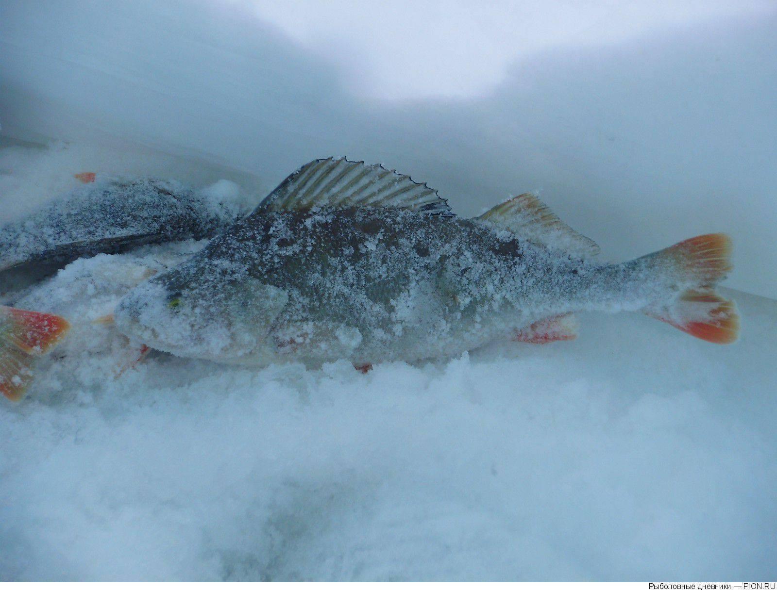 Поездка на рыбалку на озеро к…(рыбные места не выдаём…:-d), г. якутск.