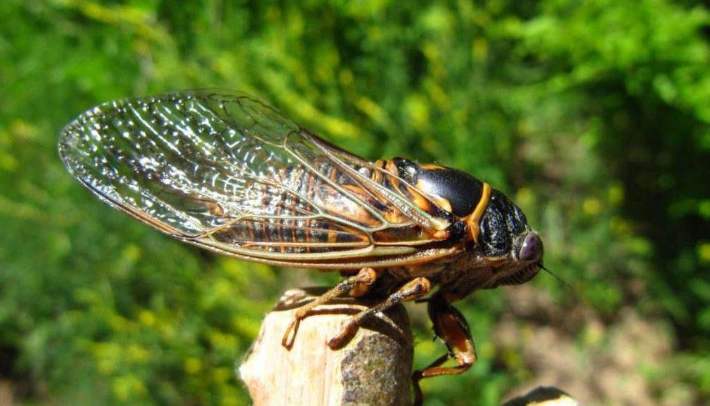 Самые крупные насекомые крыма