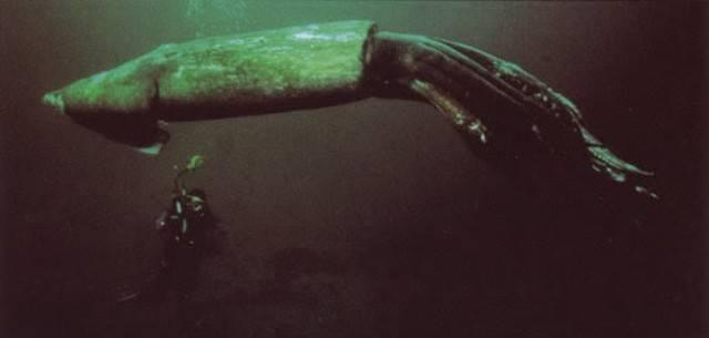 Самые жуткие животные в океане